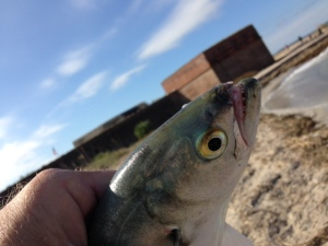 fort clinch fish and fort